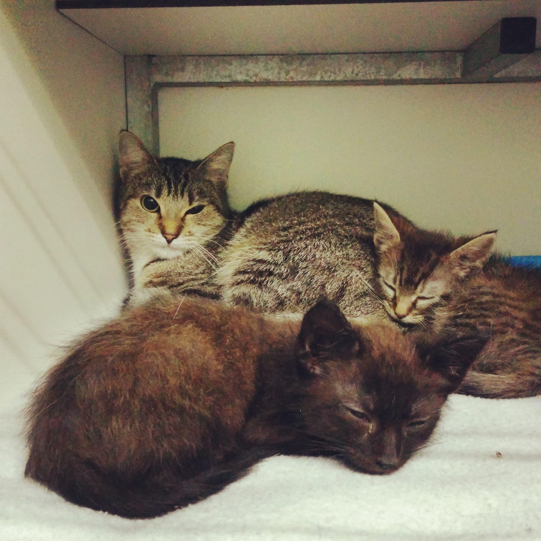 Gevonden moeder en kittens