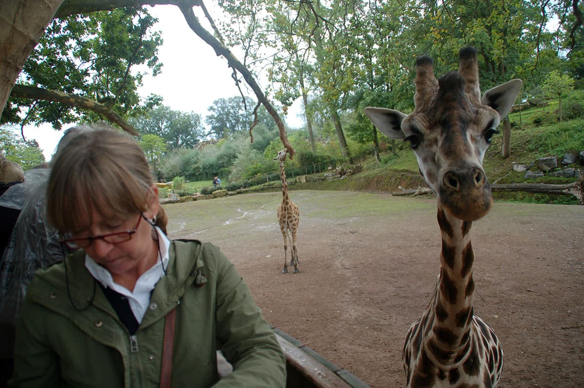 giraf02