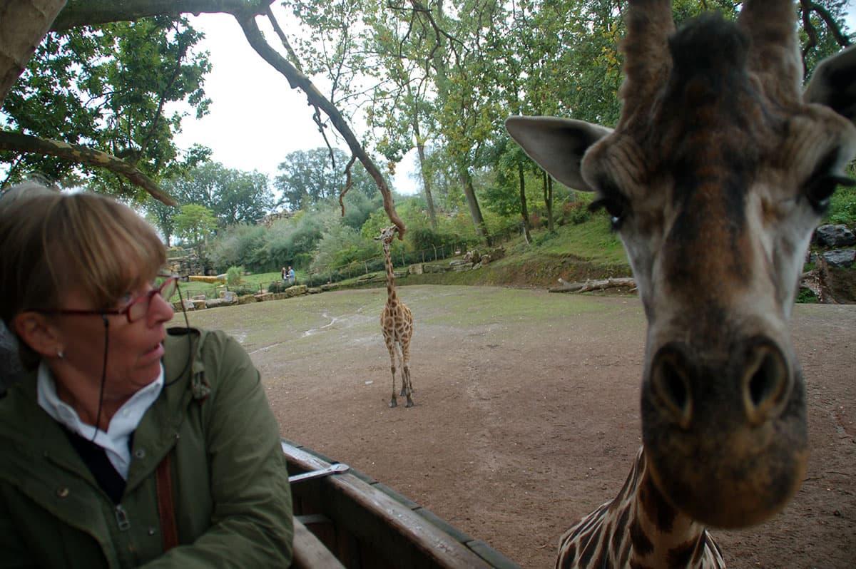 giraf03